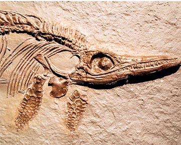 Maestría Internacional en Paleontología